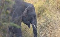 Cần hành động khẩn cấp để bảo tồn voi rừng ở Yok Don