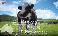 Giấc mơ sữa Việt trên VTV