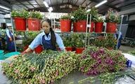 Đà Lạt, TP.HCM mở Trung tâm giao dịch hoa