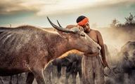 Ảnh tuyệt đẹp vào chung khảo cuộc thi ảnh 'lớn nhất thế giới'