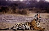 Ấn Độ che giấu tin hổ chết?