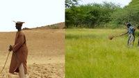 """Giúp trồng rừng bằng cách… """"search"""" trênEcosia"""
