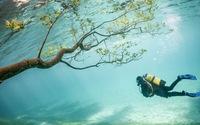 Xem clip khu rừng chìm dưới hồ nước tuyệt đẹp ở Áo