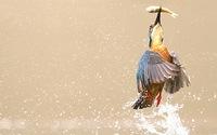 Ảnh chim đớp cá lọt vào top ảnh du lịch 'ấn tượng nhất mọi thời'