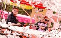 Nhật Bản bắt đầu nhộn nhịp đón mùa hoa anh đào
