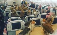 80 chú chim lên máy bay du lịch cùng hoàng tử