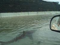 Tin giả tung chiêu ăn theo bão Harvey ở Mỹ