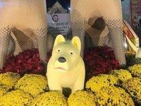 Chó con sầu buồn ở đường hoa
