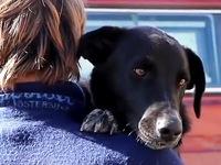 Chú chó mất tích được tìm lại sau 3 tháng