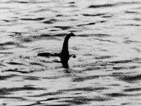 Quái vật hồ Loch Ness chỉ là một con cá da trơn cỡ lớn?
