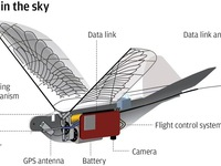 Trung Quốc giám sát người dân bằng drone robot hình chim
