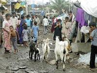 Đến Ấn Độ ở trong khu ổ chuột