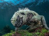 Ảnh thiên nhiên tuyệt đẹp từ Natural World Photography