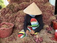 Phụ hồ, xe ôm, người giúp việc, lượm ve chai… ở Sóc Trăng được hỗ trợ 1,5 triệu đồng