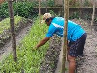Cuộc thi 'Lan tỏa năng lượng tích cực 2021': Thầy giáo trồng rau, làm lồng chim mưu sinh mùa dịch