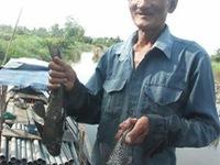 Bắt được nhiều cá lau kính trên sông Sài Gòn
