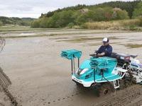 Nông dân Fukushima bắt đầu trồng lại lúa sau thảm họa hạt nhân