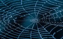 Tơ nhện sẽ được dùng làm vải thông minh, cơ bắp nhân tạo?