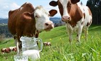 Sữa bò cho trẻ em - dùng thế nào cho hợp lý?