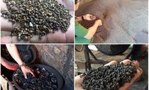 Công an Đắk Nông tung trinh sát đi điều tra về cà phê pin