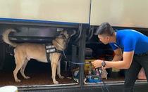 Xem chó nghiệp vụ kiểm tra an ninh trước lễ khai mạc SEA Games 2019