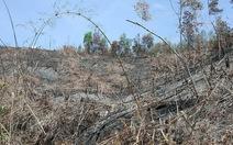 Bắt khẩn cấp hai người phá gần 3ha rừng làm nương rẫy