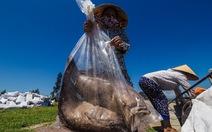 Xác cá chết chất thành đống sau bão số 10