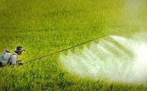 Yêu cầu xử lý việc mất kiểm soát thuốc trừ sâu