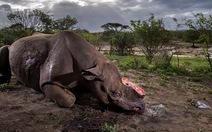 Ảnh tê giác đen bị cưa sừng thắng giải ảnh quốc tế 2017