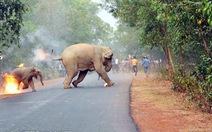 Sốc ảnh mẹ con voi bị ném xăng bốc cháy