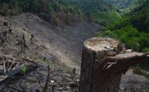 Sau dự án nuôi rừng là... phá rừng
