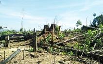 Xác định một số người phá rừng phòng hộ ở Quảng Nam