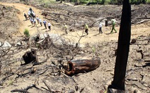 Kỷ luật 7 người vì làm mất 61ha rừng ở Bình Định