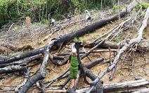 7 năm, hơn 50 vụ phá rừng phòng hộ ở Quảng Nam