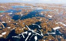 Rác thải làm ô nhiễm biển ở đảo du lịch nổi tiếng