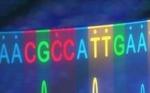 'Phẫu thuật' ADN trong phôi người để chữa tan máu bẩm sinh