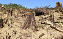 Cận cảnh 44ha rừng bị xóa sổ ở Bình Định