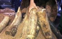 Khởi tố vụ vận chuyển 1,3 tấn ngà voi châu Phi