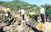 Khởi tố vụ án phá 43,7 hecta rừng ở An Lão