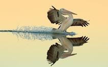 Ngắm thế giới chim chóc kỳ thú đoạt giải ảnh quốc tế