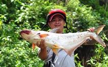 Thủy điện ngưng xả lũ, dân bắt hàng tấn cá 'khủng'