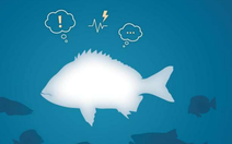 Cá cũng có cảm xúc như người?