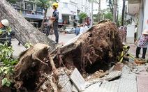 Khẩn trương kiểm tra hàng cây xanh trên đường Nguyễn Thái Bình