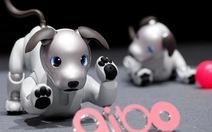 Sony ra mắt chó robot mới ứng dụng trí tuệ nhân tạo