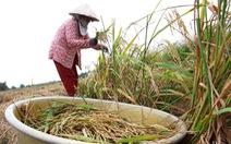Bắc Bộ rét đậm, Nam Bộ có mưa trái mùa nhưng không cứu được hạn mặn