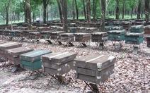Châu Âu là thị trường hứa hẹn của mật ong Việt Nam