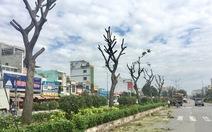 Mở đường và trồng cây xanh từ đất quốc phòng bàn giao TP.HCM