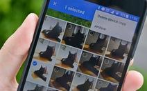 Google Photos có thể nhận diện thú cưng của bạn