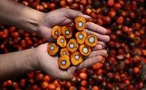 Malaysia, Indonesia lo ngại hoạt động xuất khẩu dầu cọ sang EU