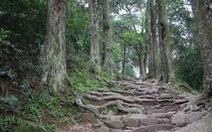 Bảo tồn cây Xích Tùng cổ